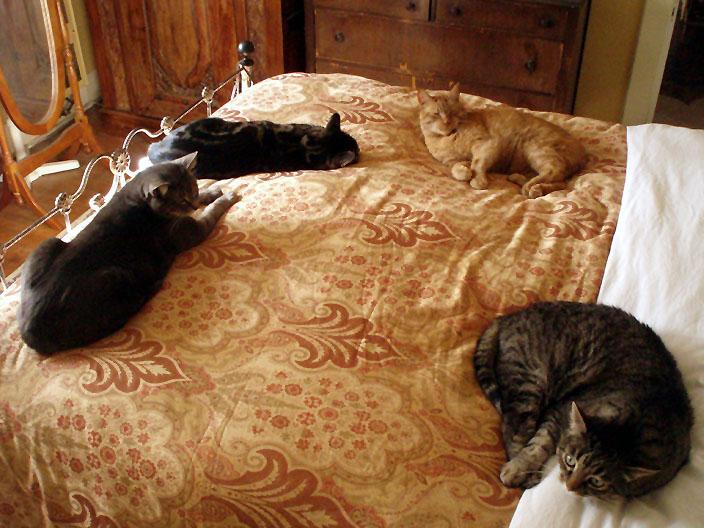 fourcats.jpg