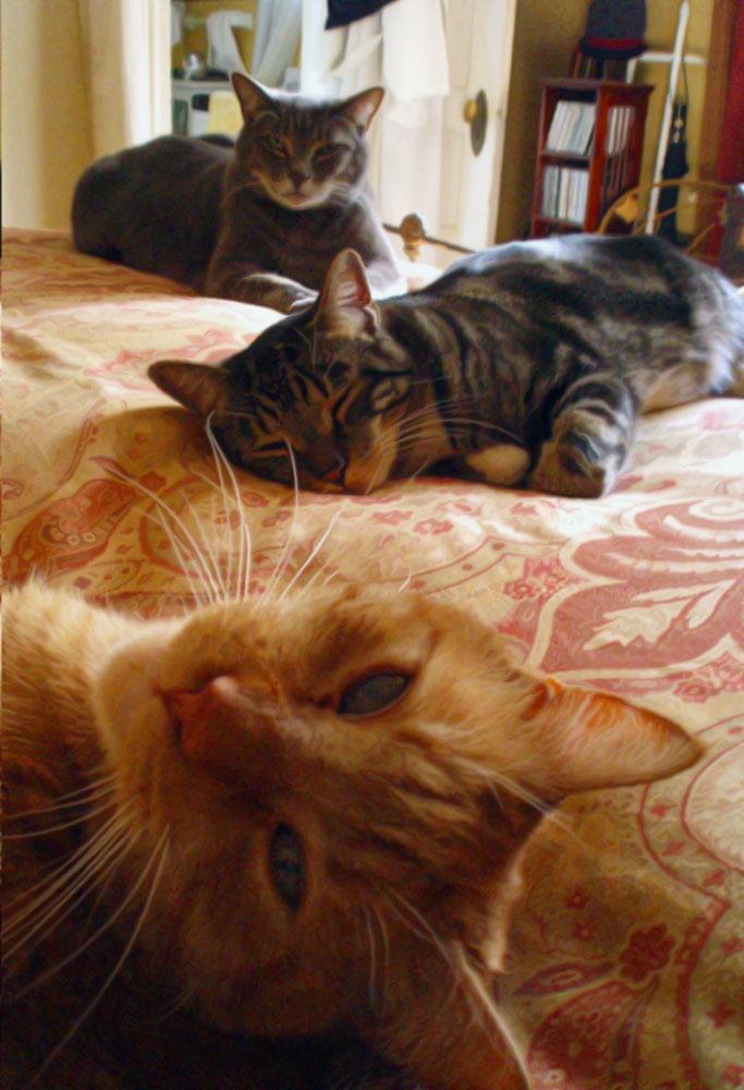 threecats2.jpg