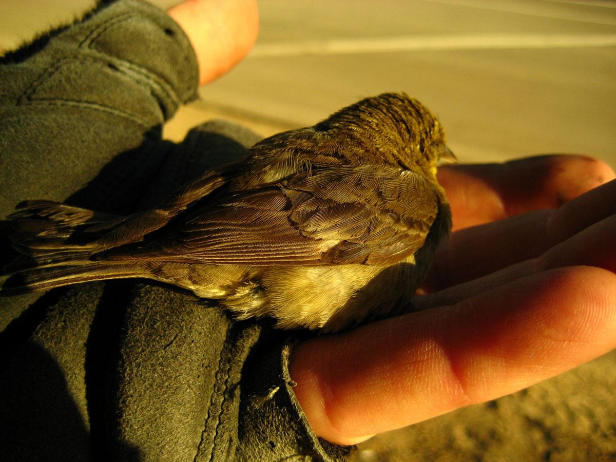 birdie2.jpg