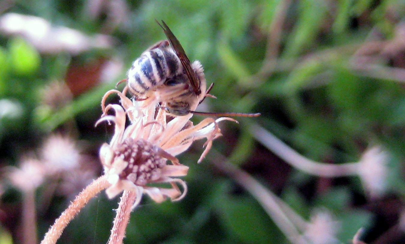 burrbee2.jpg