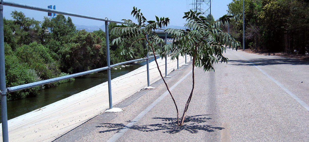 treegrow.jpg