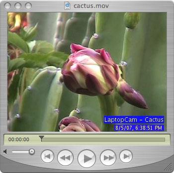 cactusstill.jpg