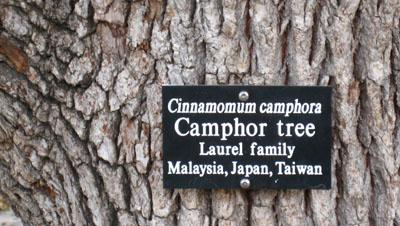 camphor2.jpg