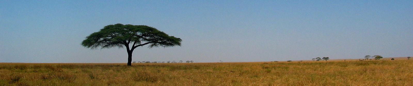 serengeti.jpg