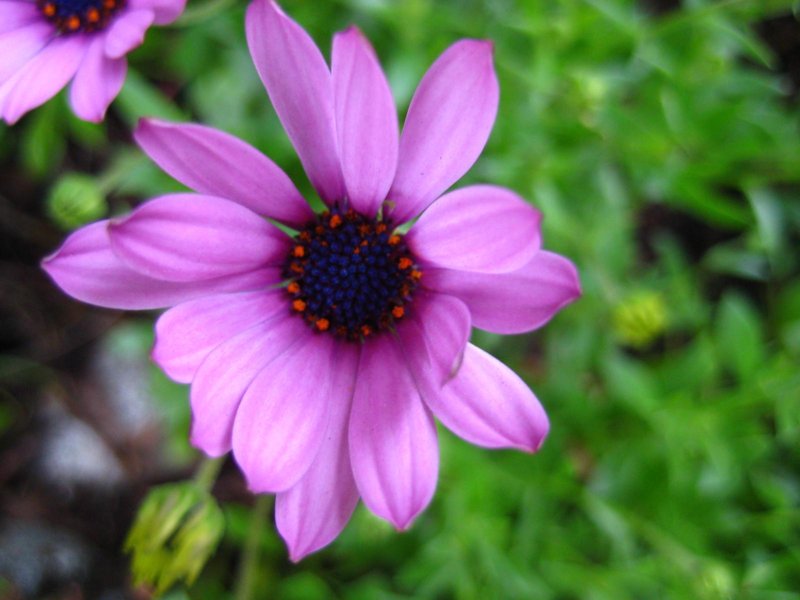 fleurz.JPG
