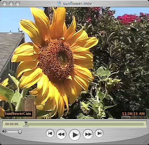snflowercam