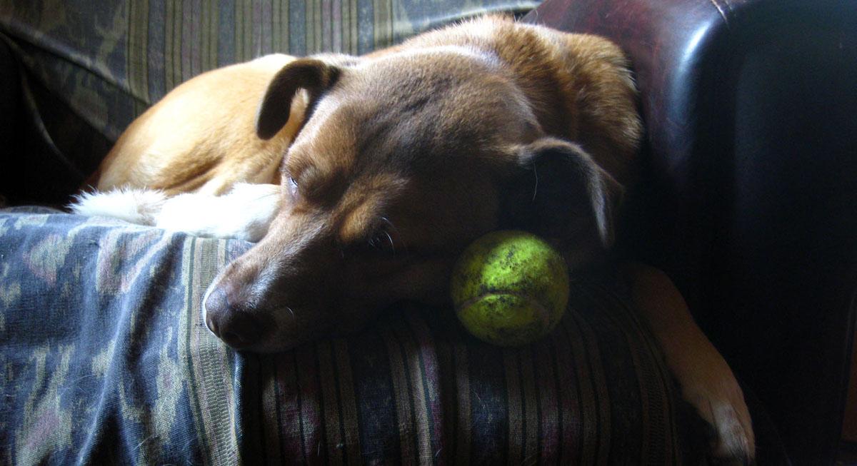 wc_dogball
