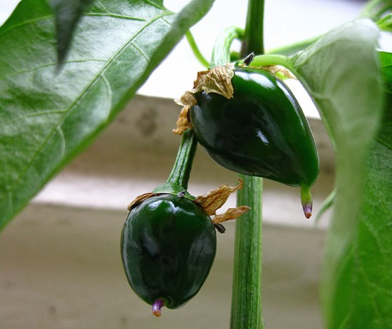bcpeppers