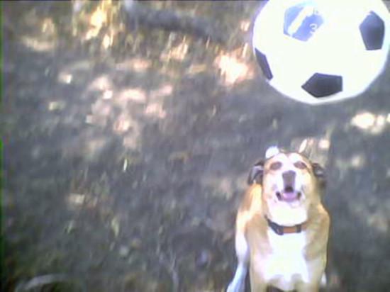 soccerdawg