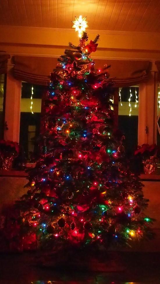 tree-550x975
